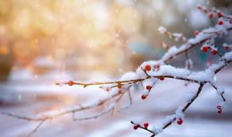 哪些有关于雪或梅的诗句