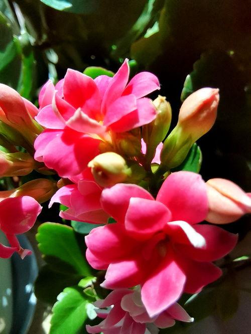 最漂亮的家养花