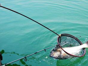 手竿钓鲢鳙,把握现在的最好时机,这几个技巧助你连竿上鱼!  人生发展规划怎么写