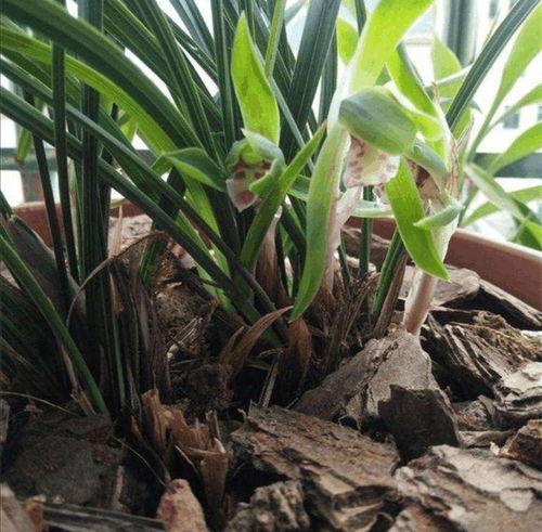 松塔怎么处理能养花