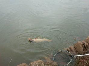 北方几月份开始可以钓鱼钓鱼