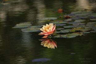 水里养花的几天换水