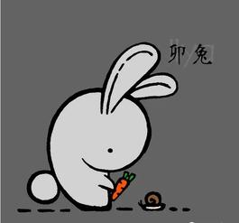 兔今十二个月运程如何