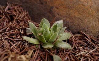 养花的土配多长时间可以用