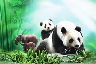长隆野生动物世界有四大科普学堂--考拉学堂、熊猫学堂、移动学堂、丛林发现,以及27个驿站!