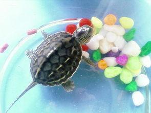 养龟的风水禁忌(办公室养龟有什么风水禁忌)