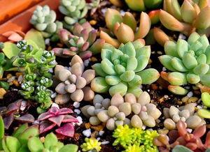 多肉植物养花
