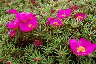如何培养花种子