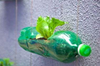 食用油塑料瓶能养花吗