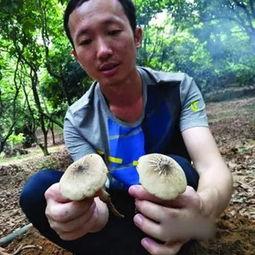 养蘑菇的菌桶可以养花吗