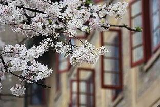 武汉大学马克思主义学院副院长袁银传高校思政课教师要树立责任意识阵地意识问题意识
