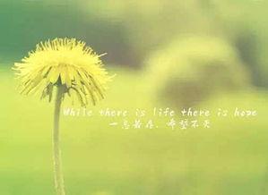 感悟人生的经典句子你知道吗?5