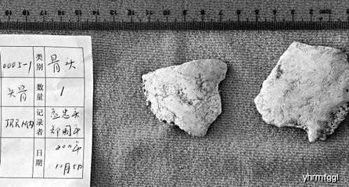 根据这块人头骨的年代以及木函片上的字,专家们很快进行了新的推测,怀疑这块人骨有可能就是人类的祖先女娲的人头骨,而在很久远女娲其实并不是单纯的一个人,一个部落的首领称为女娲,也叫娲皇,所以说这个就算不是造人的女娲的头骨,也是一位娲皇的头骨.