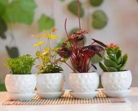 养花怎么浇水制作方法