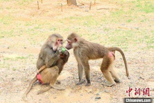 杭州野生动物世界供图