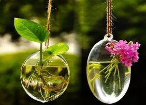 养花肥料对人体的危害