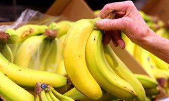 香蕉都有哪些品种