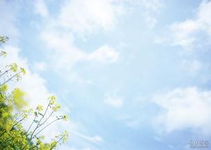 为春天写诗 晓楼听雨的博客 张笑玉的博客