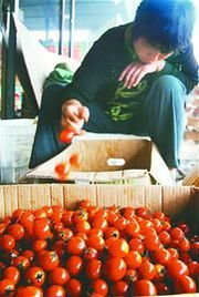 蔬菜批发生意怎么做(饮料代理一年能挣80万)