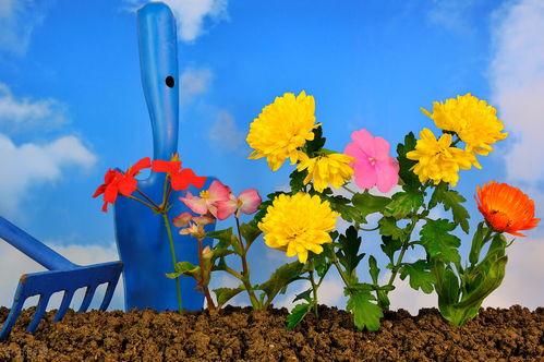 养花和人生的感悟美文