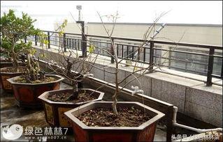 阳台养鱼养花池