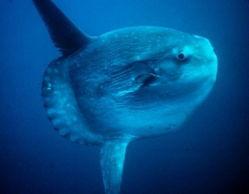 令人叹为观止的动物之最 巨型乌贼超10米