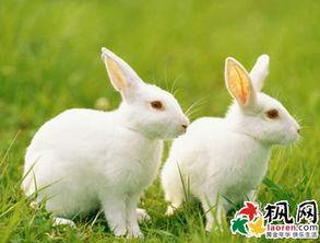 梦到兔子是什么意思 周公解梦梦到兔子相关梦境
