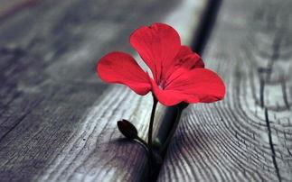 金命人养花是不爱活吗