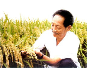 中国首届国家最高科学技术奖得主-杂交水稻之父