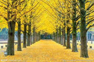 唯美梦幻的树林落叶美景高清图片