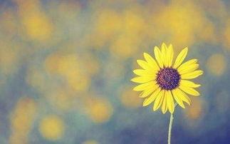 有意境很唯美的网名,向日葵高傲丶因为它有太阳