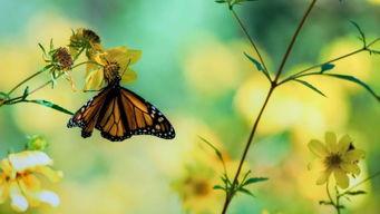 形容蝴蝶的词语