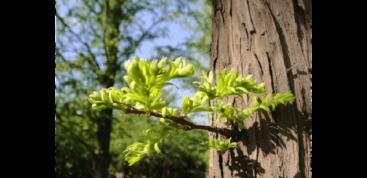 有关春天花的古诗词