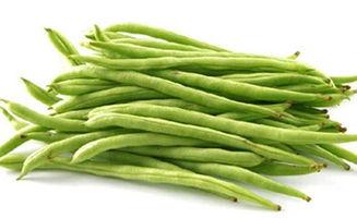 关于四季豆的知识