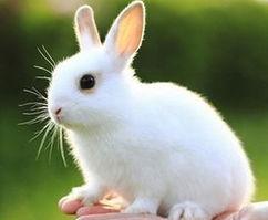 兔子的画法——可爱的兔子