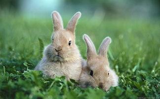 兔子动物图片大全可爱