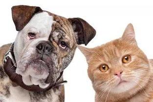 猫有猫途狗有狗道谚语