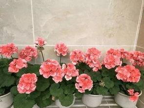活性硅能养花吗