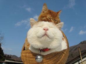 都市白领恋上 猫叔 来减压