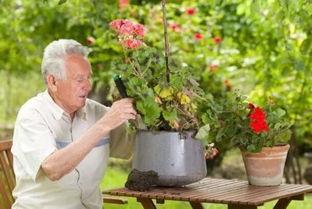 养花对老人的益处