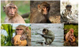 狗猴人每月运程
