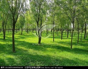 草地和小树林,树木,植物花草,摄影,汇图网