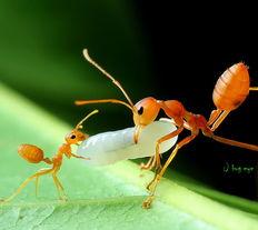 养花出现蚂蚁怎么办
