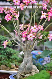 ...菊 香水合欢 铁兰花.....这些新花扎堆亮相成都