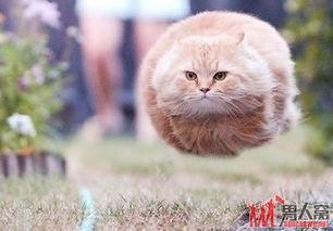 猫咪搞笑趣图,逗你哈哈大笑