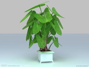 二、卧室摆放植物,夫妻和睦