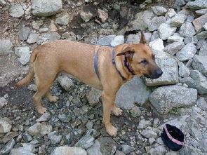 宠物狗主人不想养狗抛弃它,绑在山里几天差点饿死
