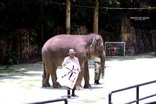 长隆野生动物世界,令人称赞的四大剧场