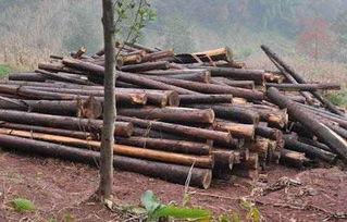 零星树木砍伐申请书