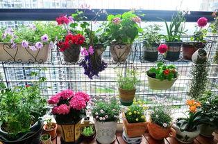 排水层养花